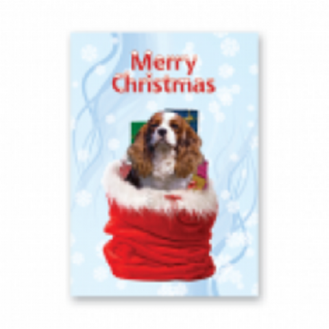 King Charles Cavalier Christmas pack of five